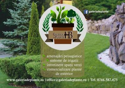 Galeria de Plante